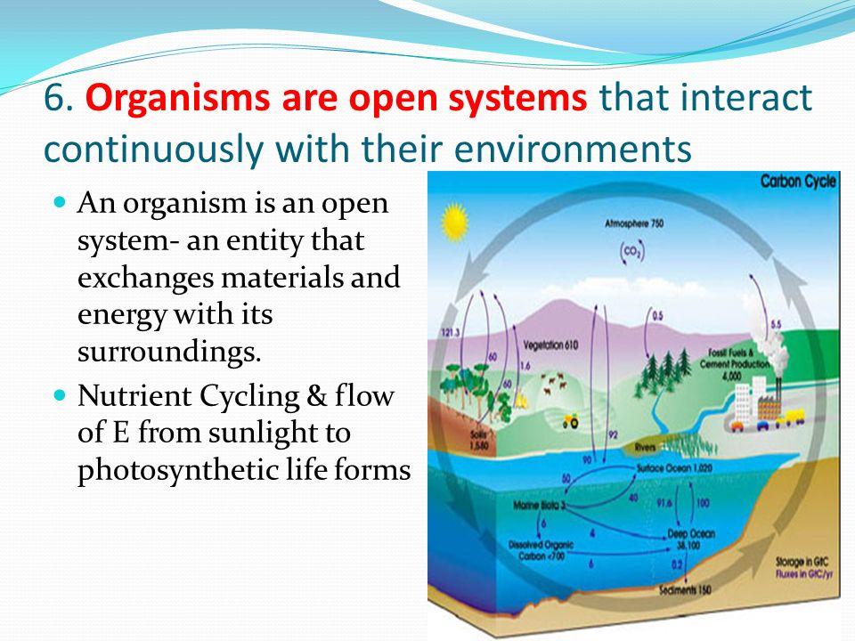 6. Organisms are open systems that interact continuously with their environments