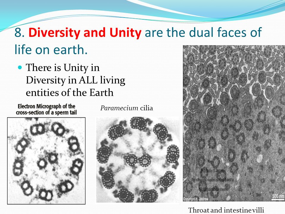 8. Diversity and Unity are the dual faces of life on earth.