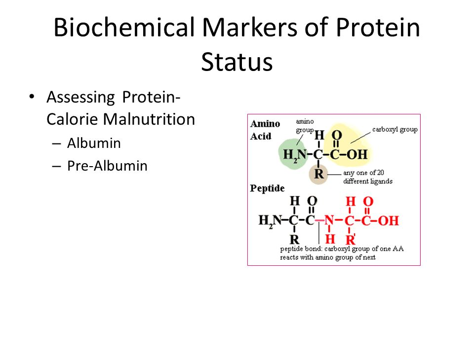 Biochemical Markers of Protein Status