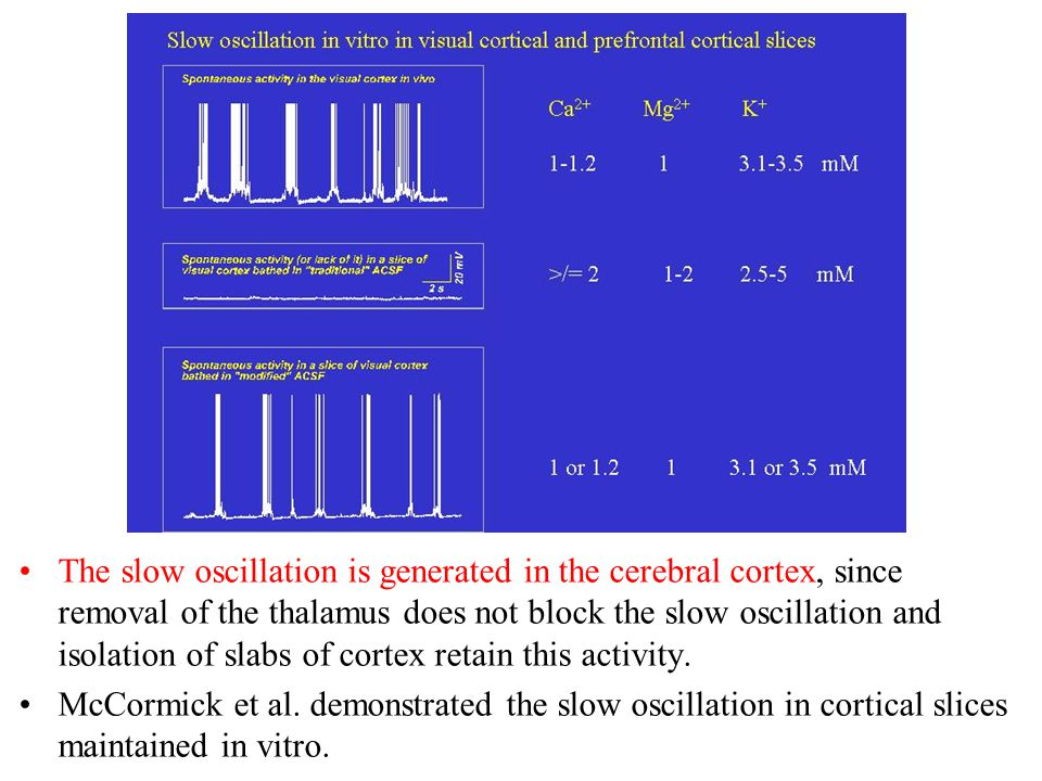 The slow oscillation is generated in the cerebral cortex, since removal of the thalamus does not block the slow oscillation and isolation of slabs of cortex retain this activity.