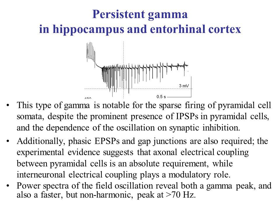 Persistent gamma in hippocampus and entorhinal cortex