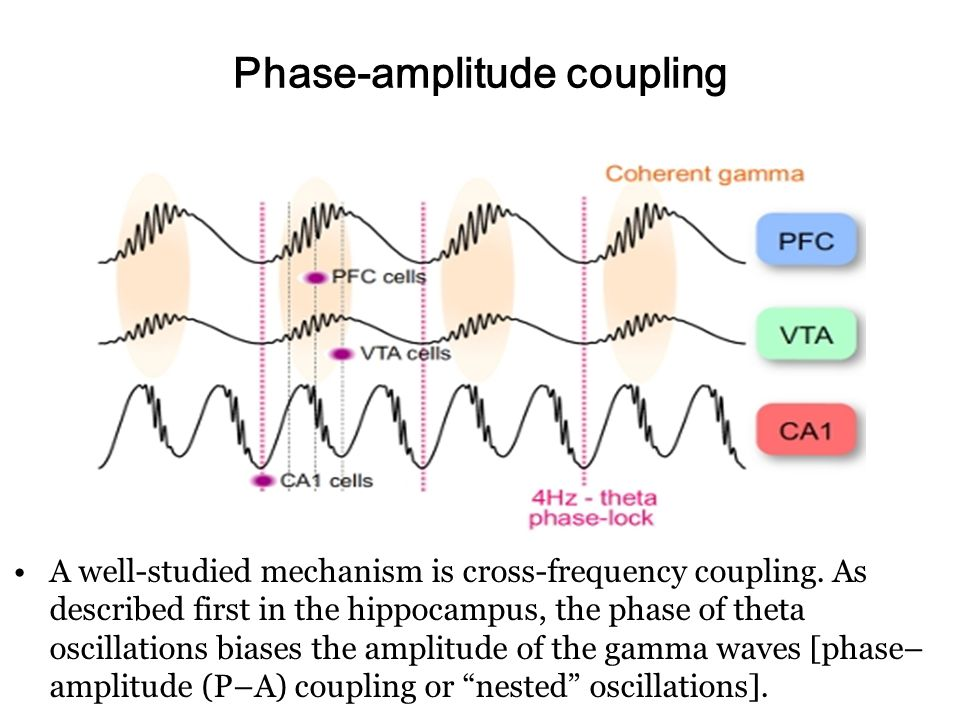 Phase-amplitude coupling