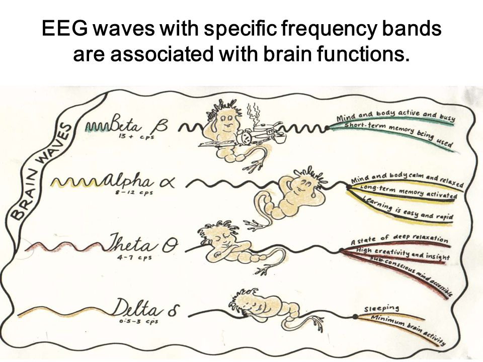 EEG waves with specific frequency bands are associated with brain functions.
