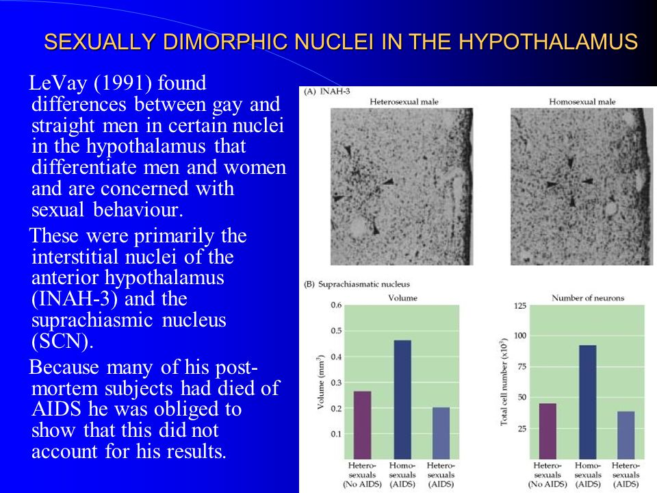 SEXUALLY DIMORPHIC NUCLEI IN THE HYPOTHALAMUS
