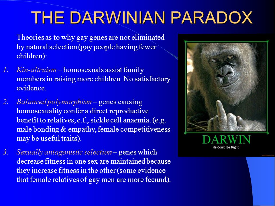 THE DARWINIAN PARADOX Theories as to why gay genes are not eliminated by natural selection (gay people having fewer children):