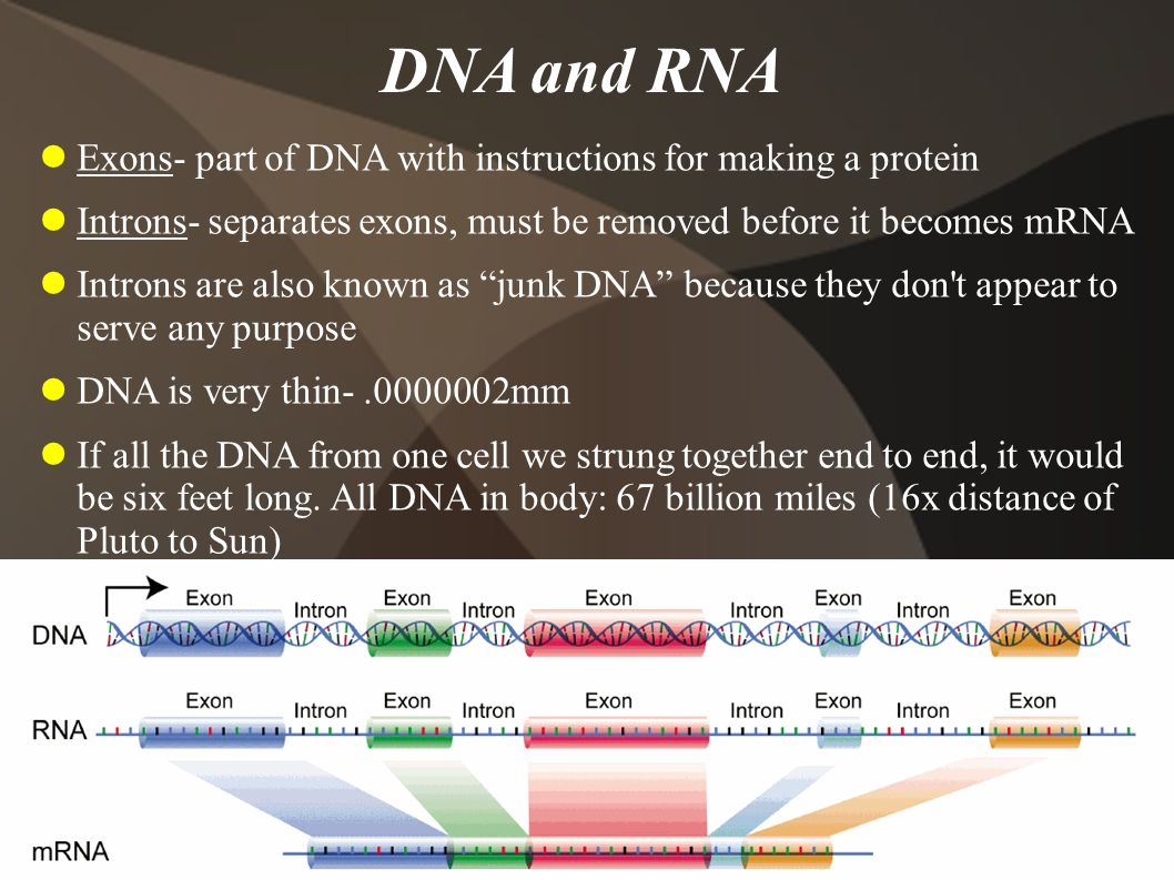 DNA and RNA Exons- part of DNA with instructions for making a protein