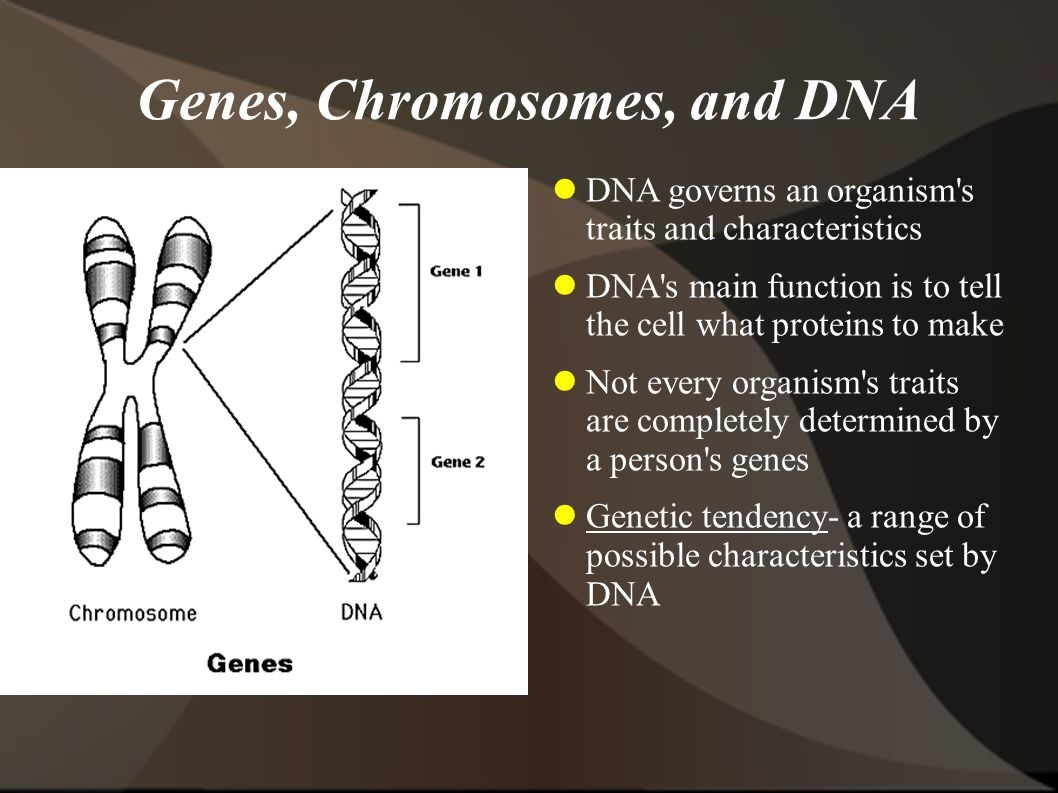 Genes, Chromosomes, and DNA