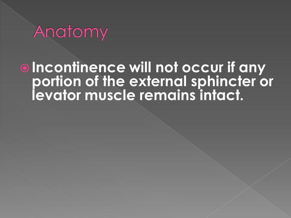Anatomy Incontinence will not occur if any portion of the external sphincter or levator muscle remains intact.