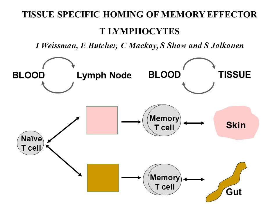 TISSUE SPECIFIC HOMING OF MEMORY EFFECTOR T LYMPHOCYTES