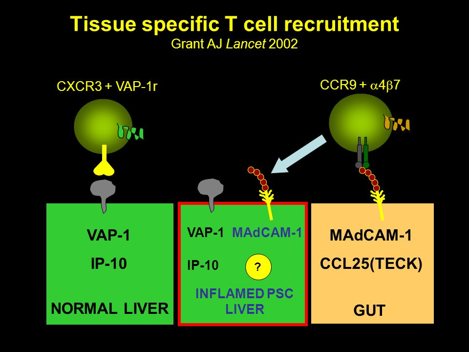 Tissue specific T cell recruitment Grant AJ Lancet 2002