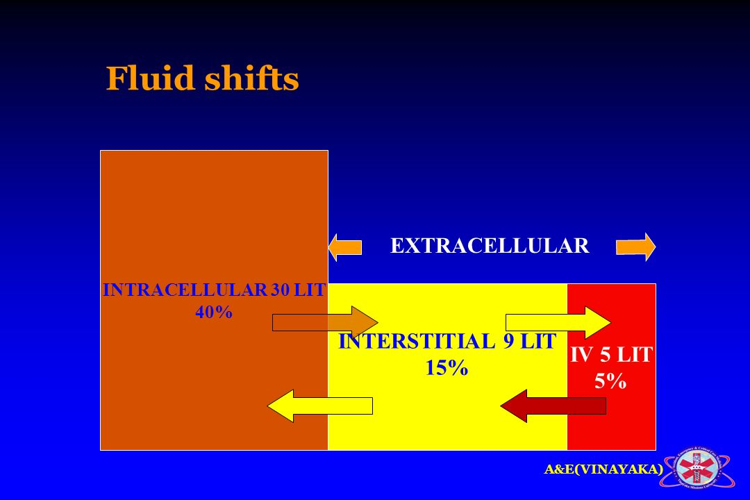 Fluid shifts EXTRACELLULAR INTERSTITIAL 9 LIT IV 5 LIT 15% 5%