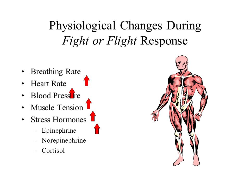Physiological Changes During Fight or Flight Response