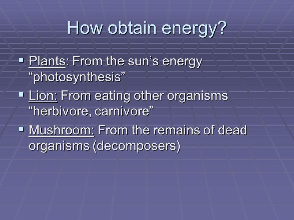 How obtain energy Plants: From the sun's energy photosynthesis