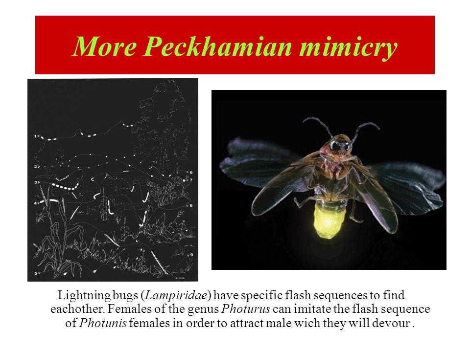 More Peckhamian mimicry
