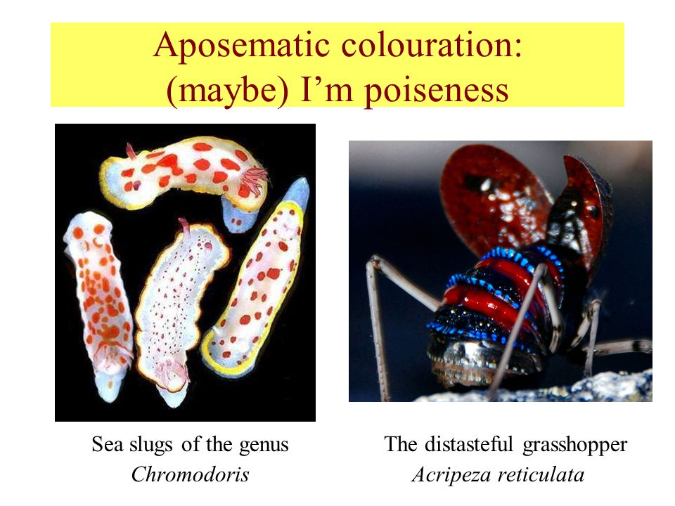 Aposematic colouration: (maybe) I'm poiseness