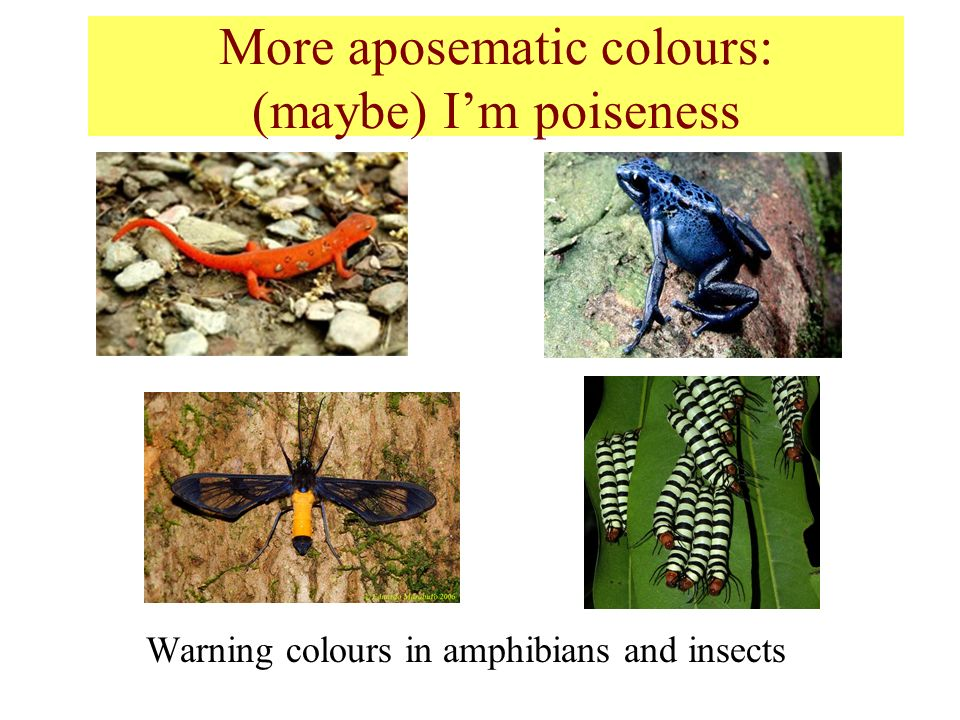 More aposematic colours: (maybe) I'm poiseness