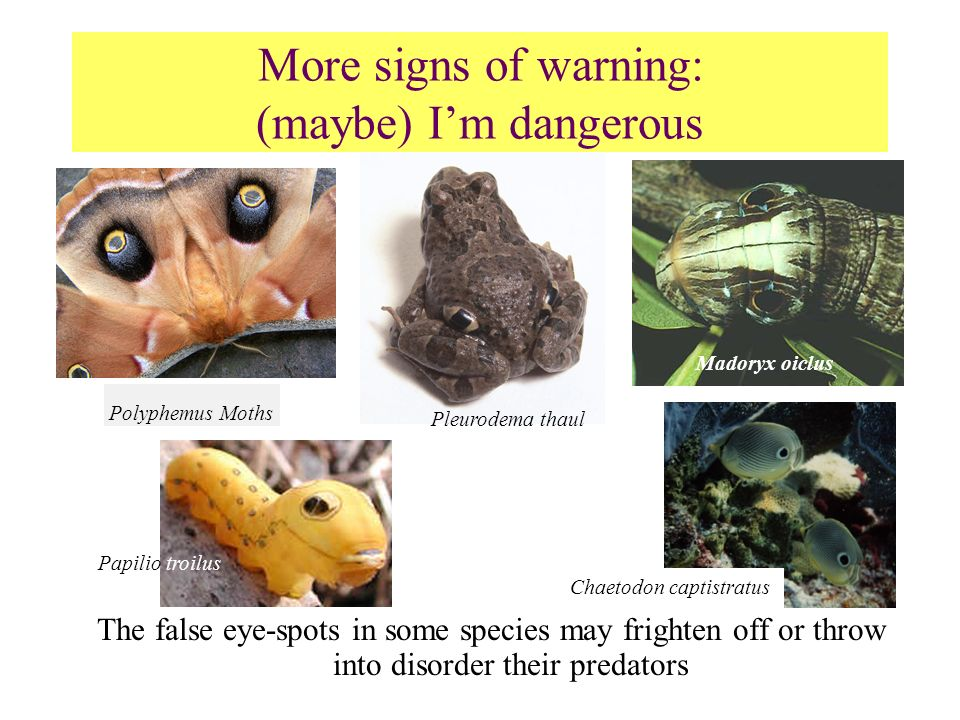 More signs of warning: (maybe) I'm dangerous
