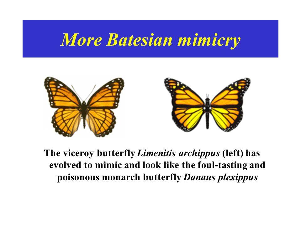 More Batesian mimicry