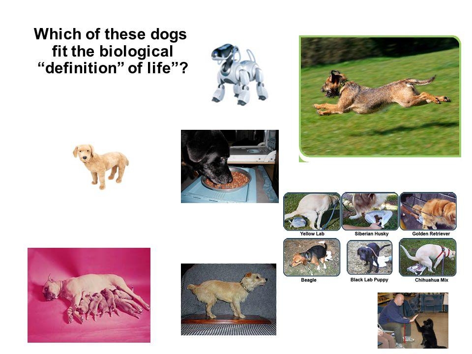 Which of these dogs fit the biological definition of life