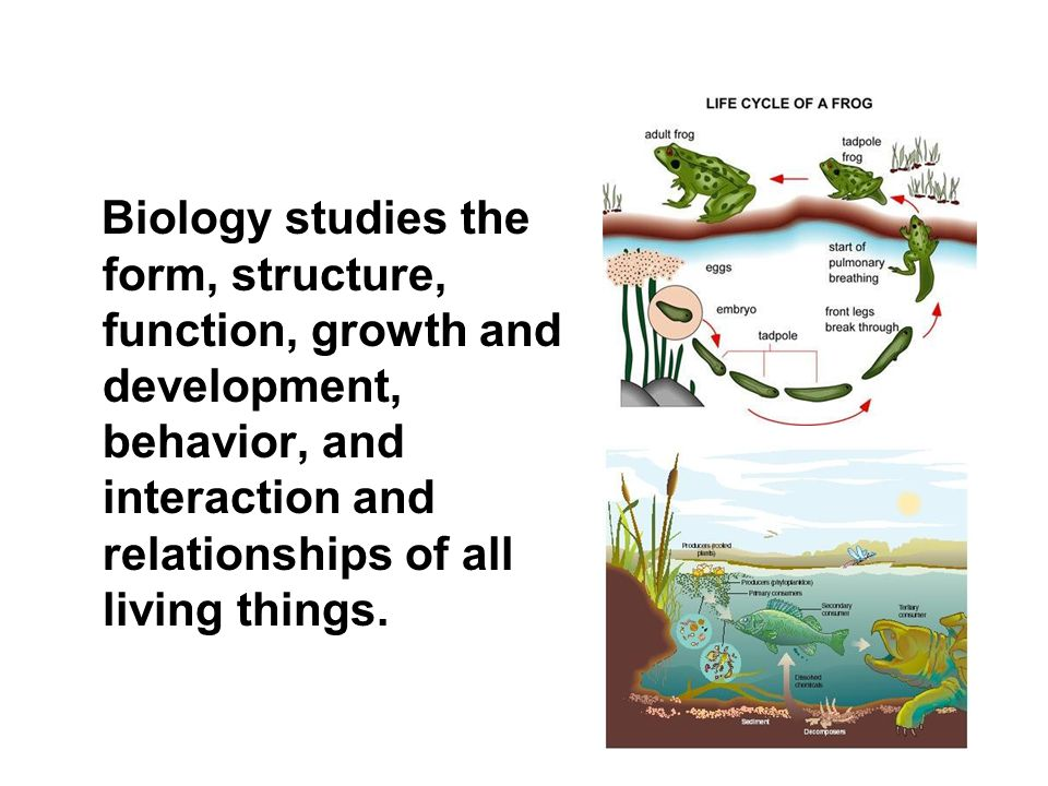 Biology studies the form, structure, function, growth and development, behavior, and interaction and relationships of all living things.
