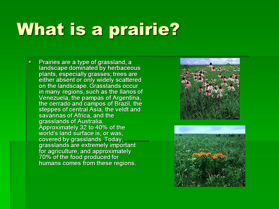 What is a prairie