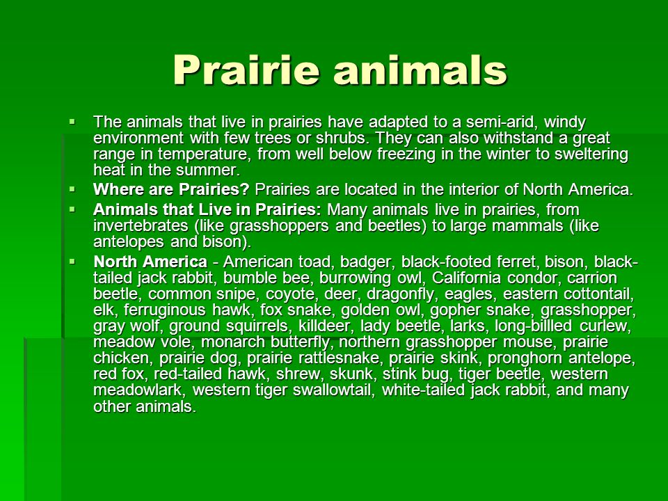 Prairie animals