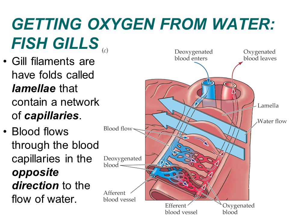 how to put oxygen in water for fish