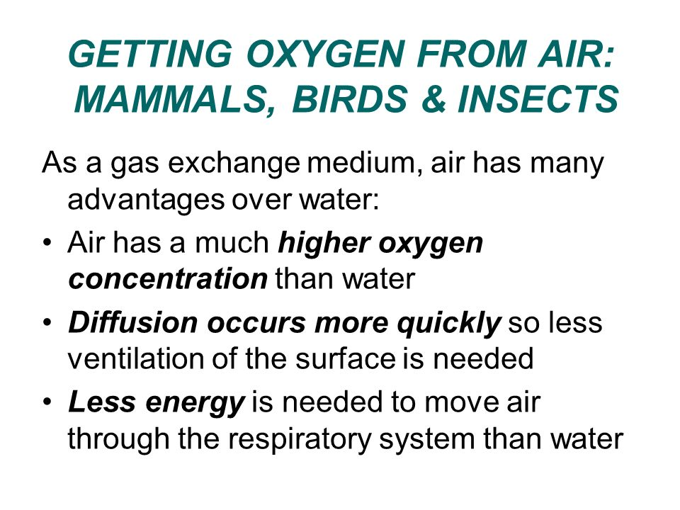 GETTING OXYGEN FROM AIR: MAMMALS, BIRDS & INSECTS