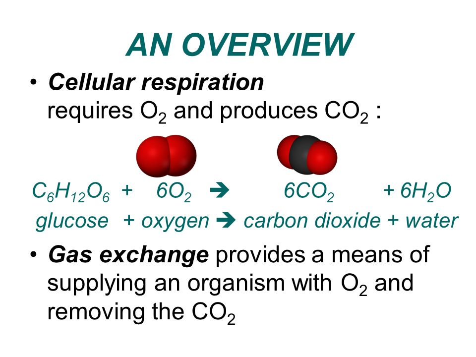 AN OVERVIEW Cellular respiration requires O2 and produces CO2 :