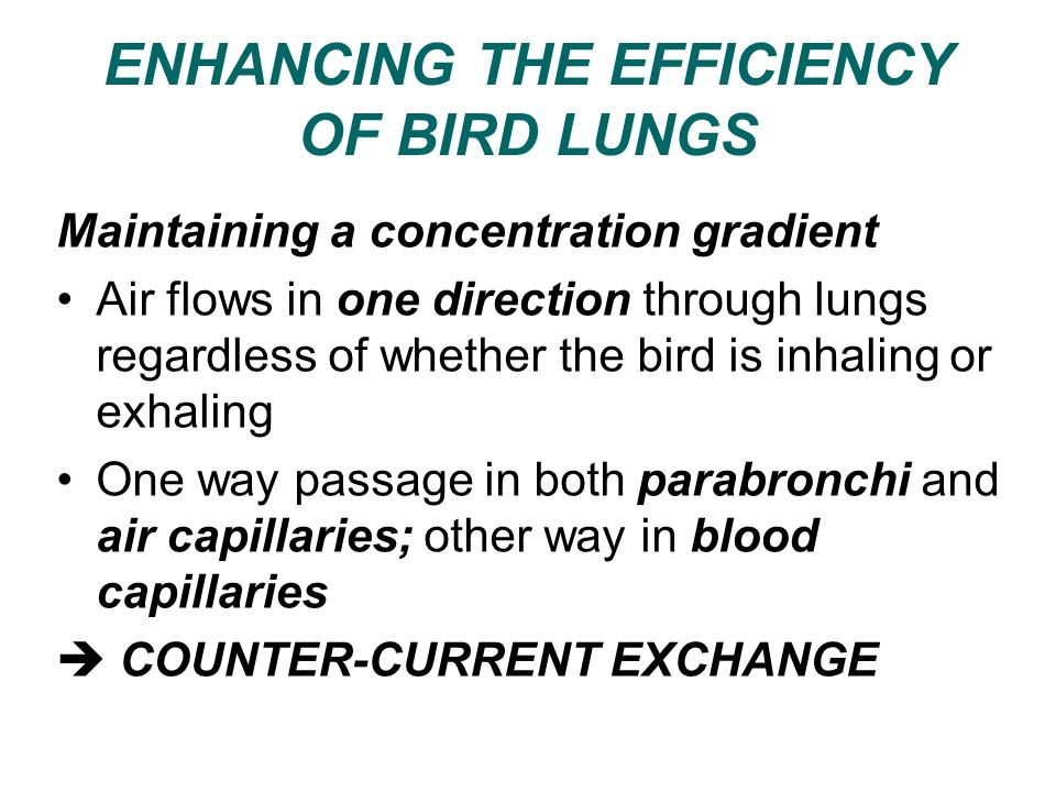 ENHANCING THE EFFICIENCY OF BIRD LUNGS