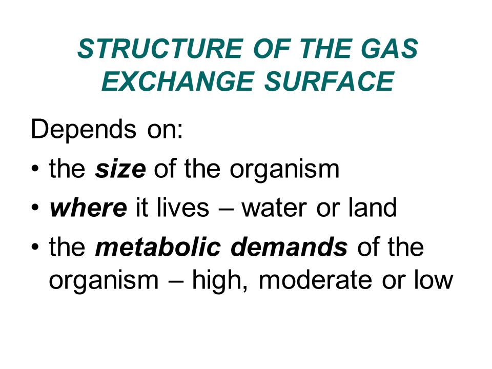 STRUCTURE OF THE GAS EXCHANGE SURFACE
