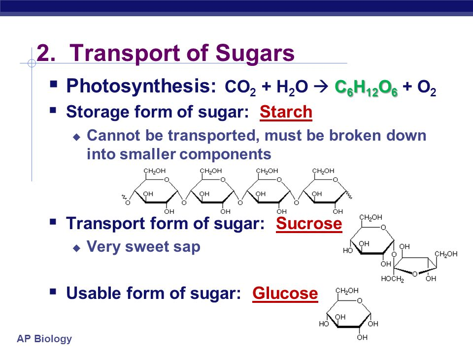 2. Transport of Sugars Photosynthesis: CO2 + H2O  C6H12O6 + O2