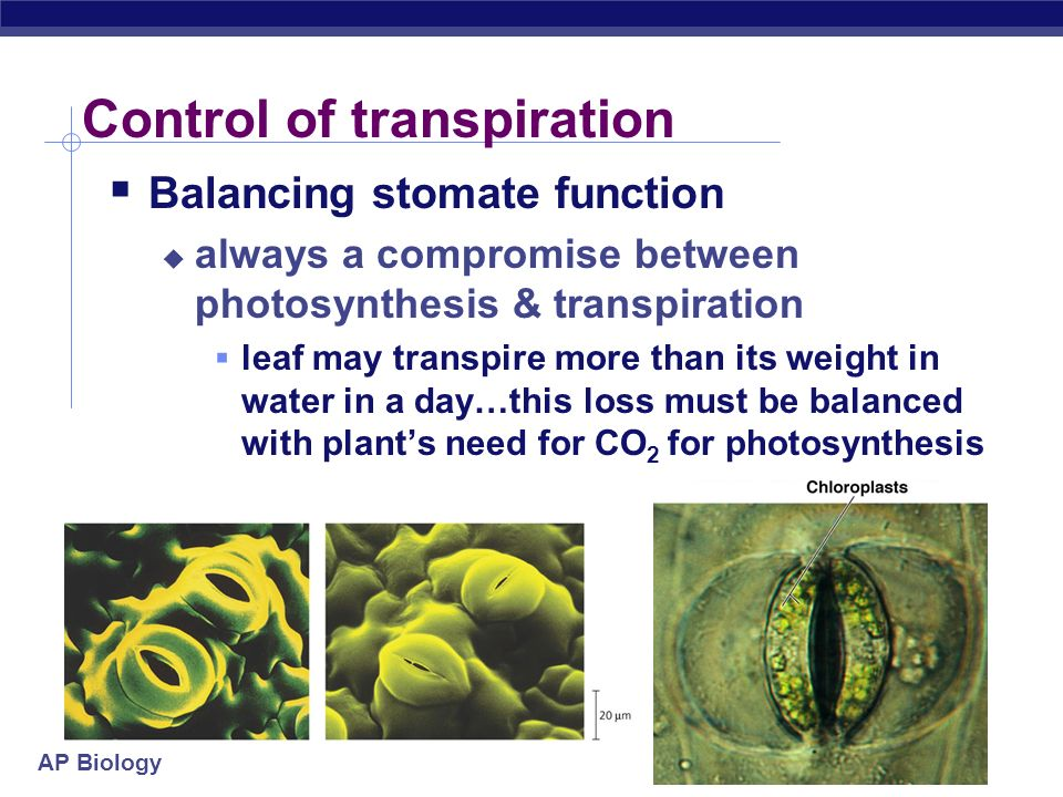 Control of transpiration