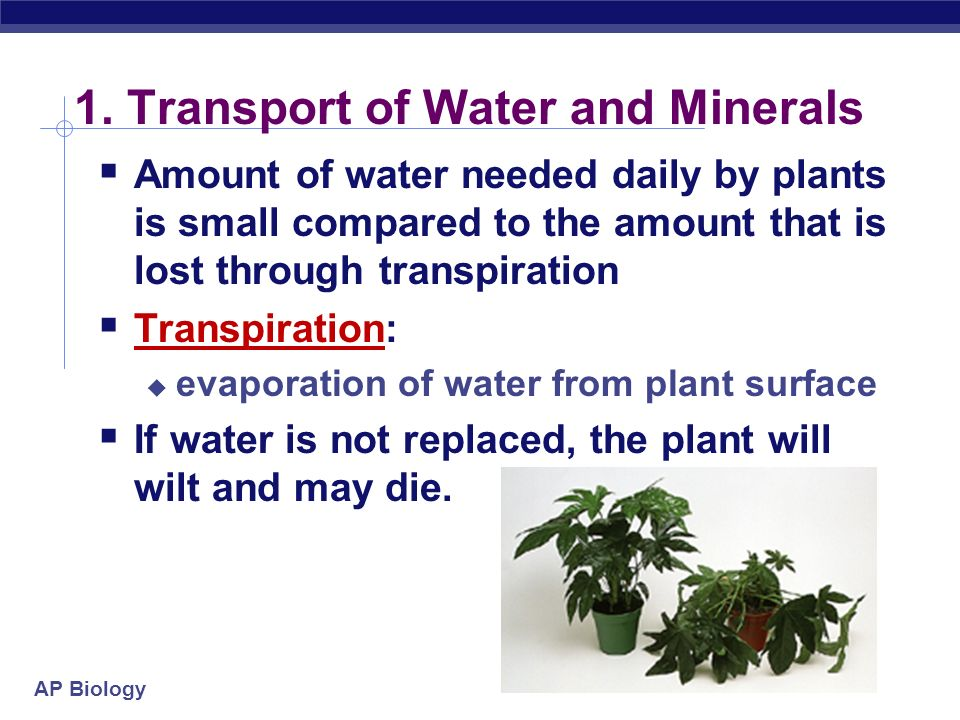 1. Transport of Water and Minerals
