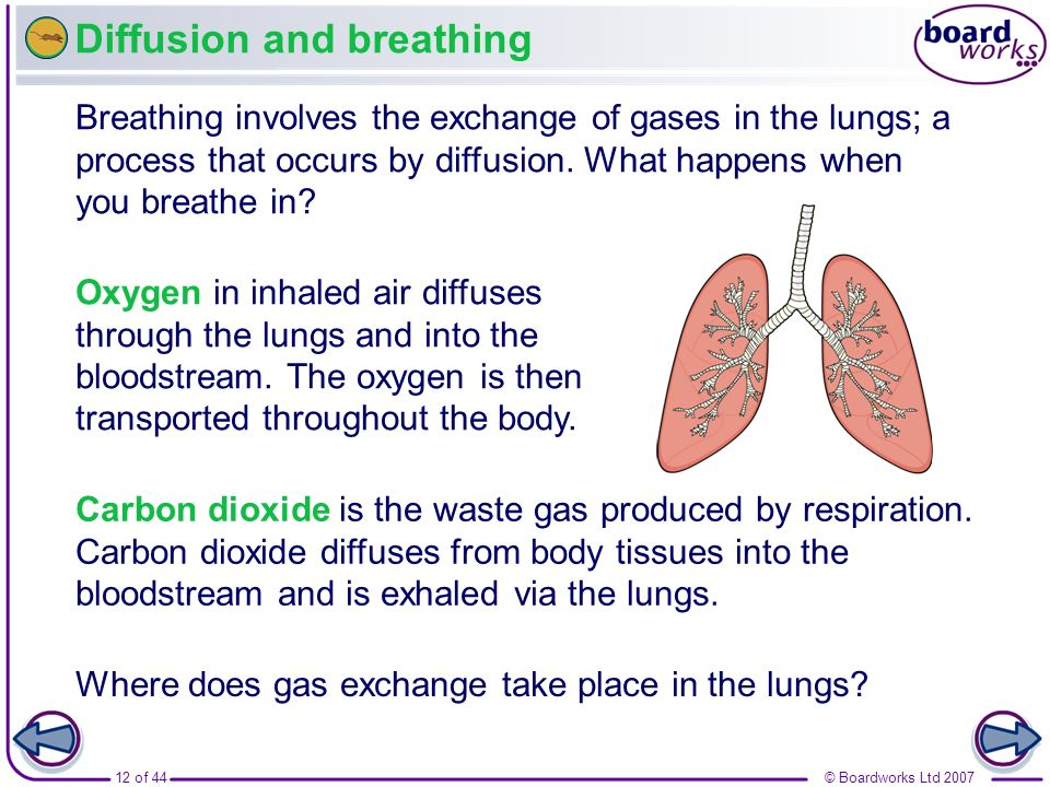 Diffusion and breathing