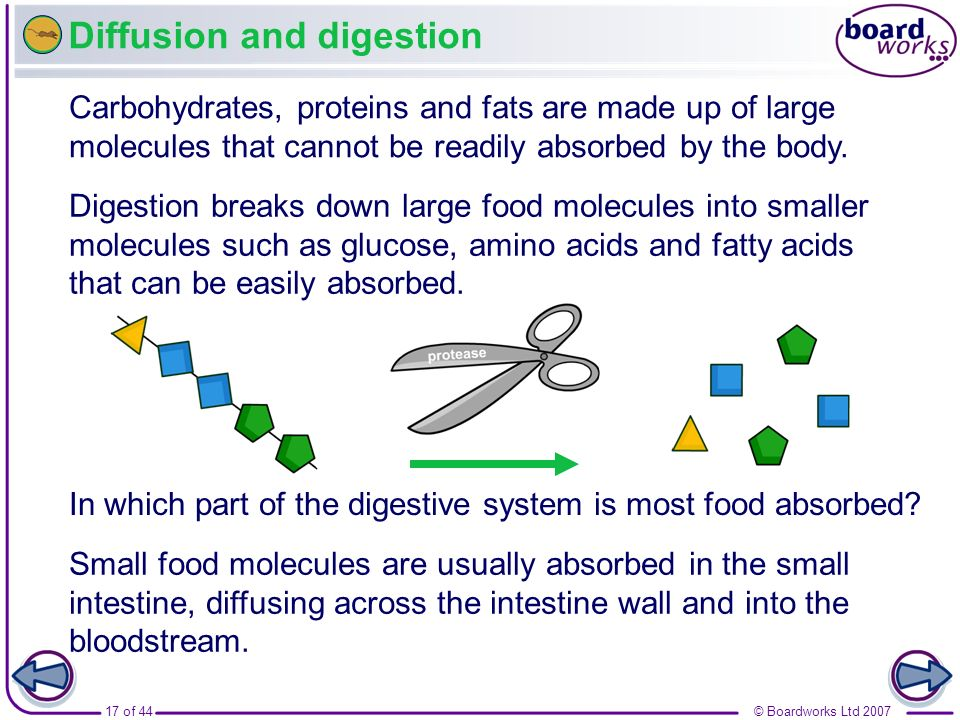 Diffusion and digestion