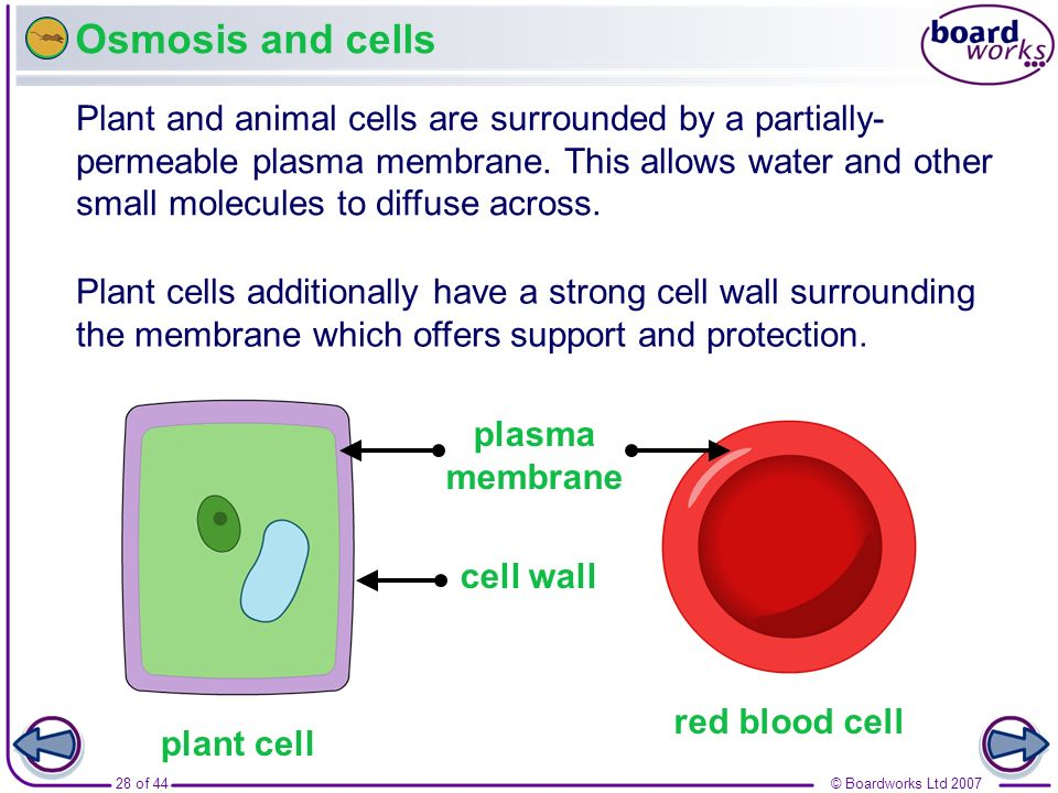 Osmosis and cells Boardworks GCSE Additional Science: Biology. Movement In and Out of Cells.