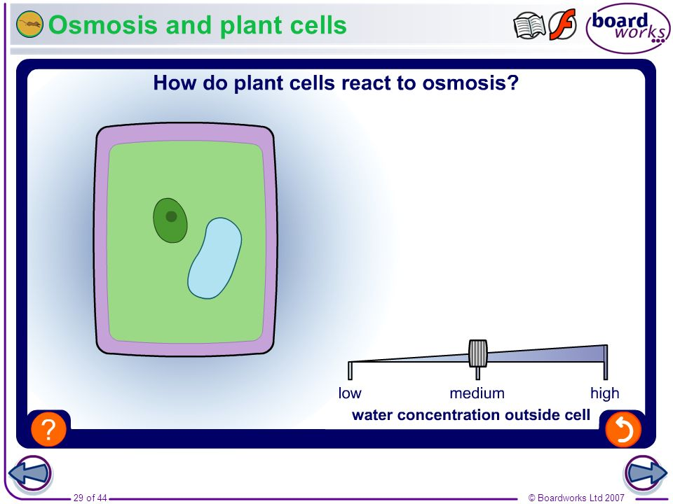 Osmosis and plant cells
