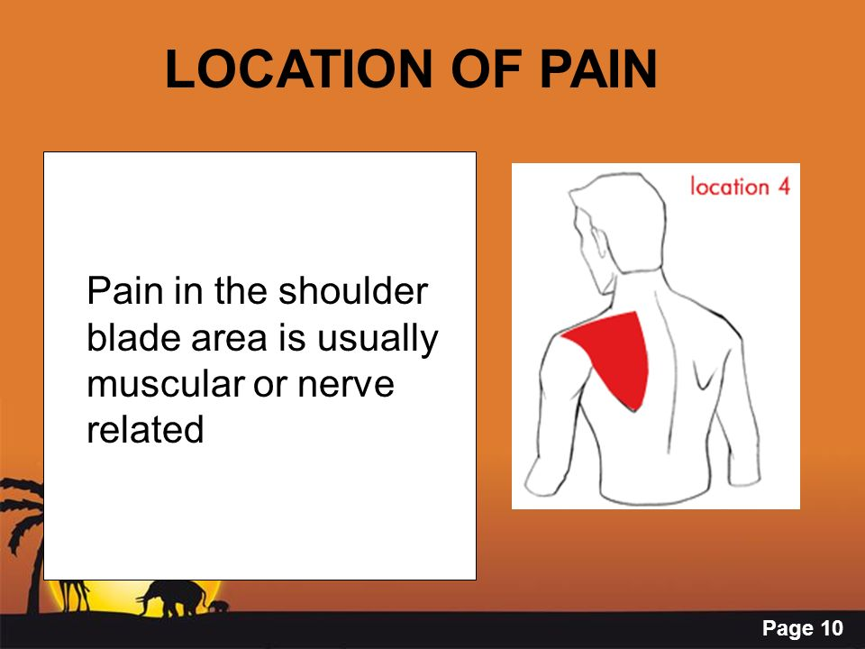 LOCATION OF PAIN Pain in the shoulder blade area is usually muscular or nerve related