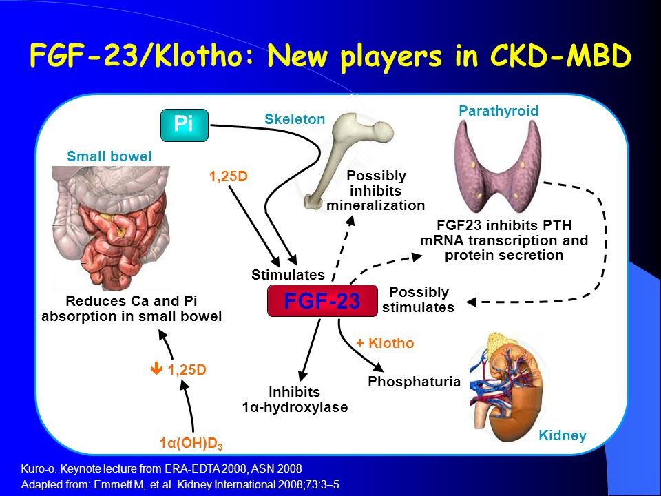 FGF-23/Klotho: New players in CKD-MBD