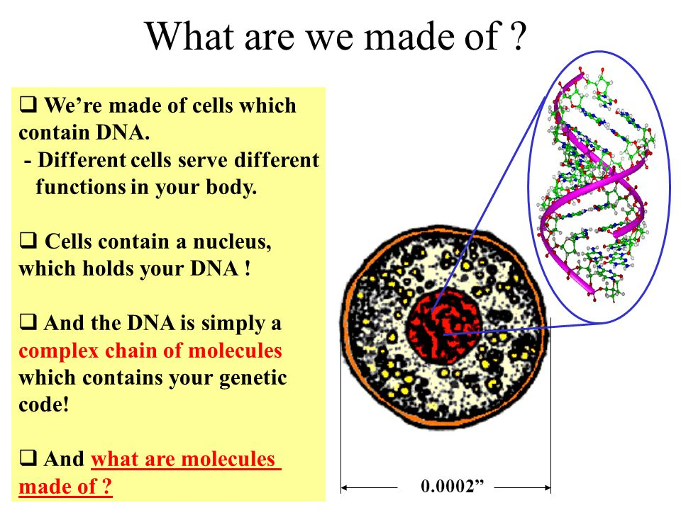 What are we made of 0.0002 We're made of cells which contain DNA. - Different cells serve different functions in your body.