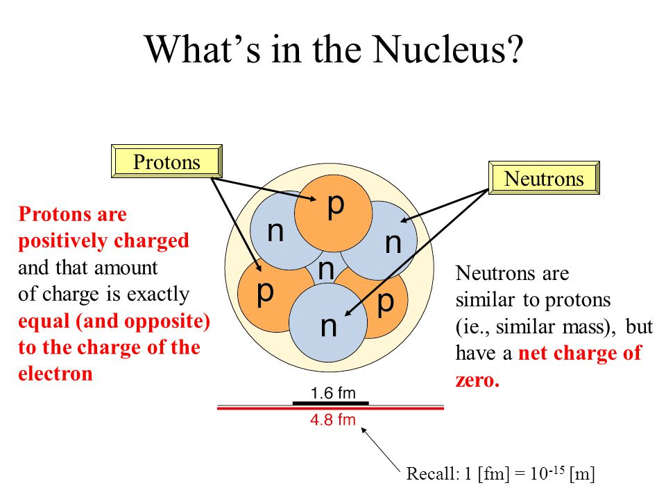 What's in the Nucleus Protons Neutrons