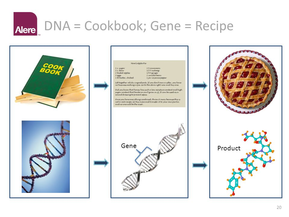DNA = Cookbook; Gene = Recipe