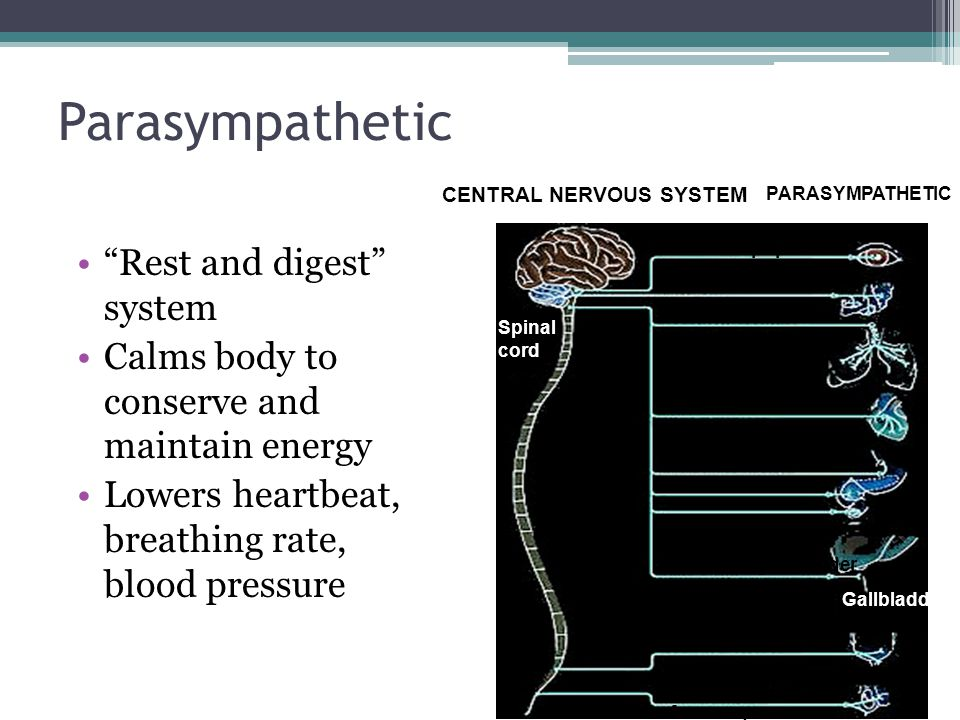 Parasympathetic Rest and digest system