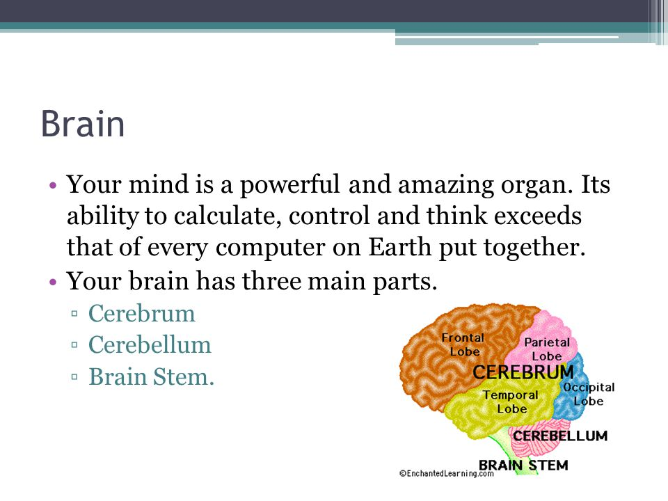 Brain Your mind is a powerful and amazing organ. Its ability to calculate, control and think exceeds that of every computer on Earth put together.