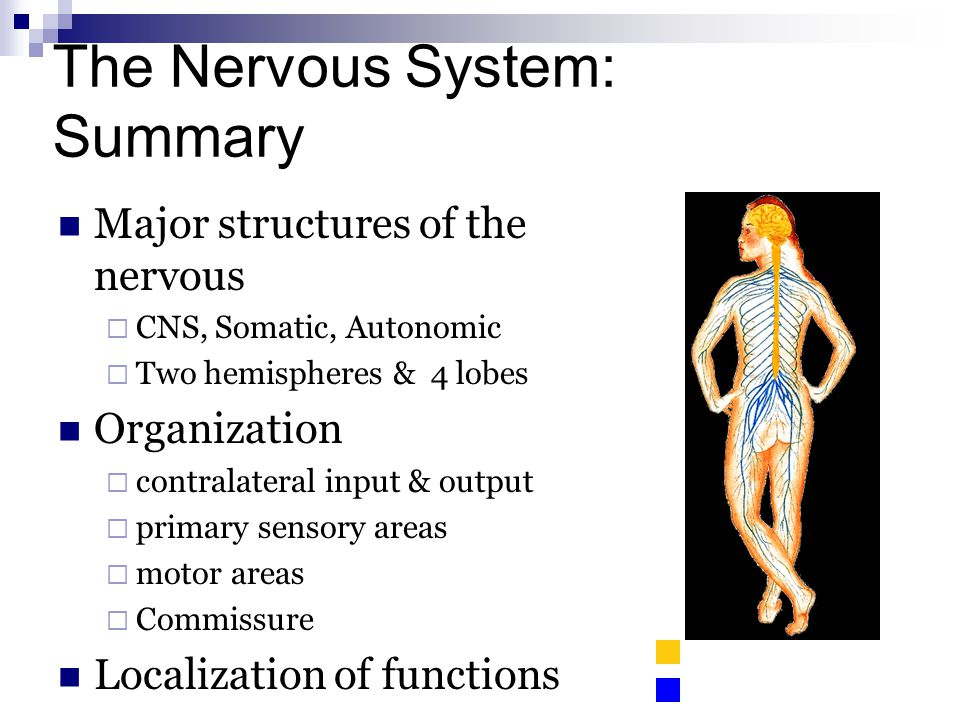 The Nervous System: Summary