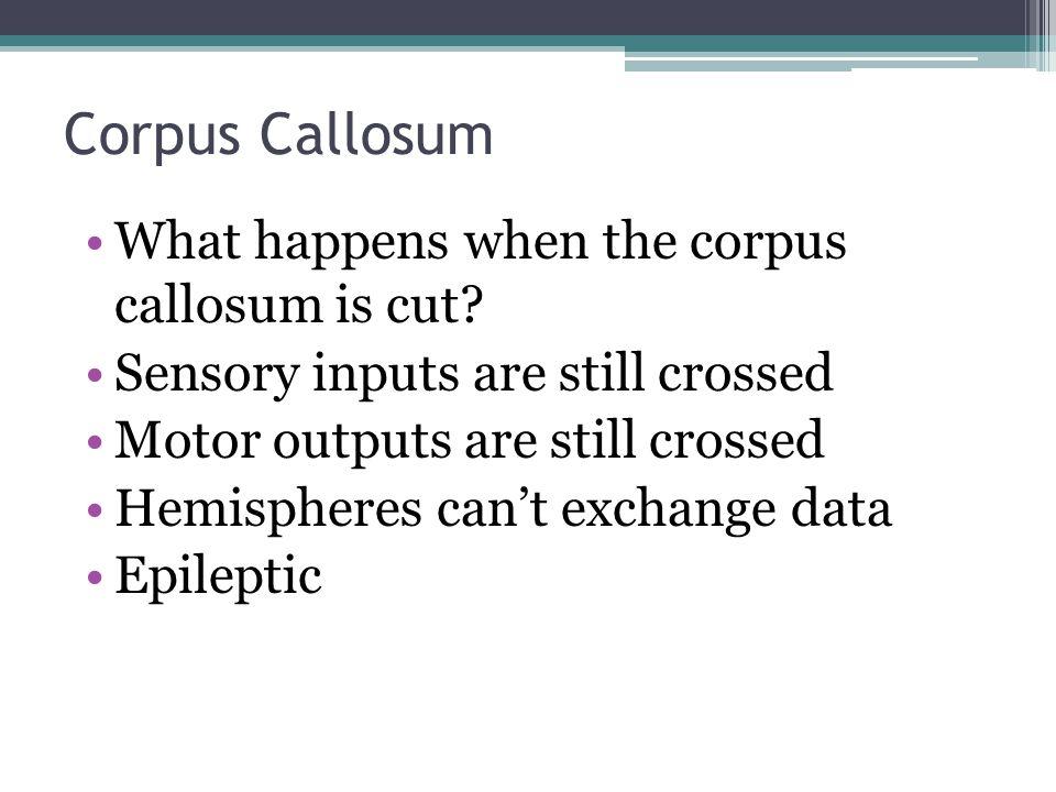 Corpus Callosum What happens when the corpus callosum is cut