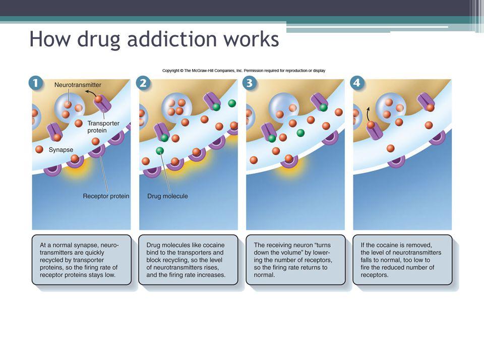 How drug addiction works
