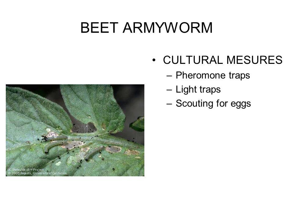 BEET ARMYWORM CULTURAL MESURES Pheromone traps Light traps