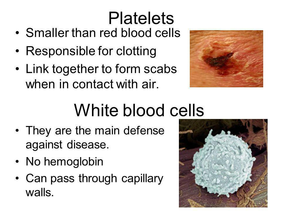 Platelets White blood cells Smaller than red blood cells